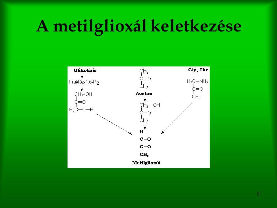 10 A metilglioxál keletkezése