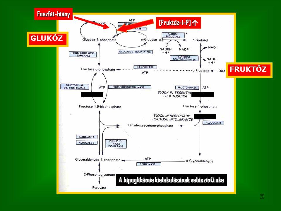 23 0 FRUKTÓZ GLUKÓZ [Fruktóz-1-P]  Foszfát-hiány A hipoglikémia kialakulásának valószín ű oka