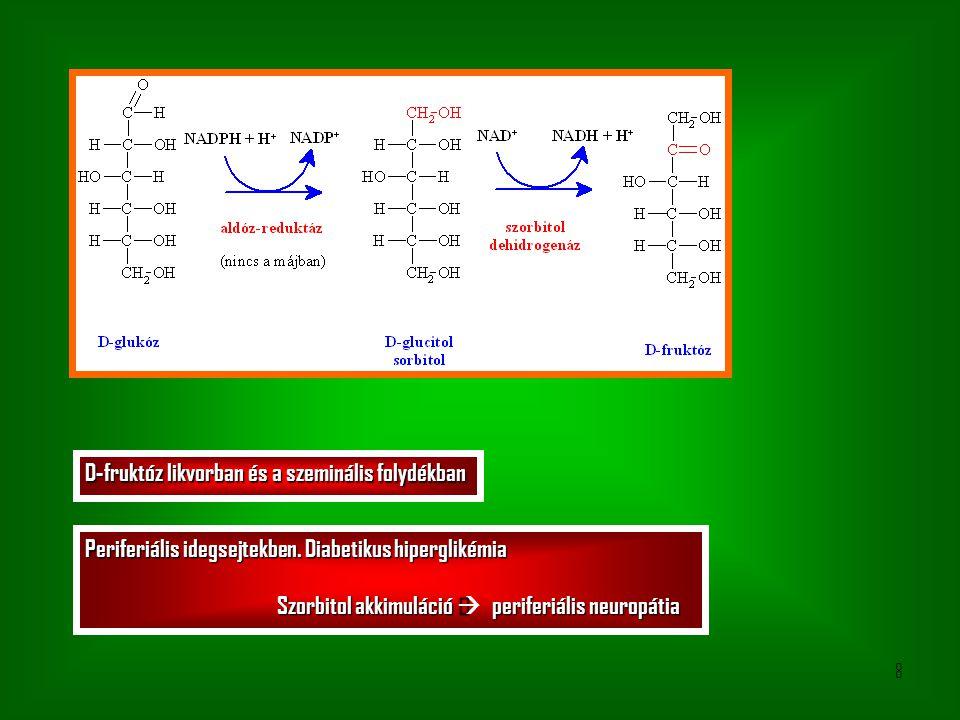 8 D-fruktóz likvorban és a szeminális folydékban Periferiális idegsejtekben.