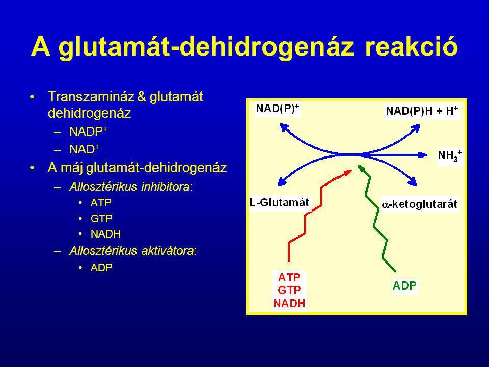 A glutamát-dehidrogenáz reakció Transzamináz & glutamát dehidrogenáz –NADP + –NAD + A máj glutamát-dehidrogenáz –Allosztérikus inhibitora: ATP GTP NAD