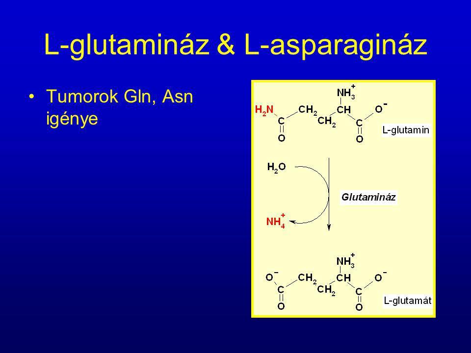 L-glutamináz & L-asparagináz Tumorok Gln, Asn igénye