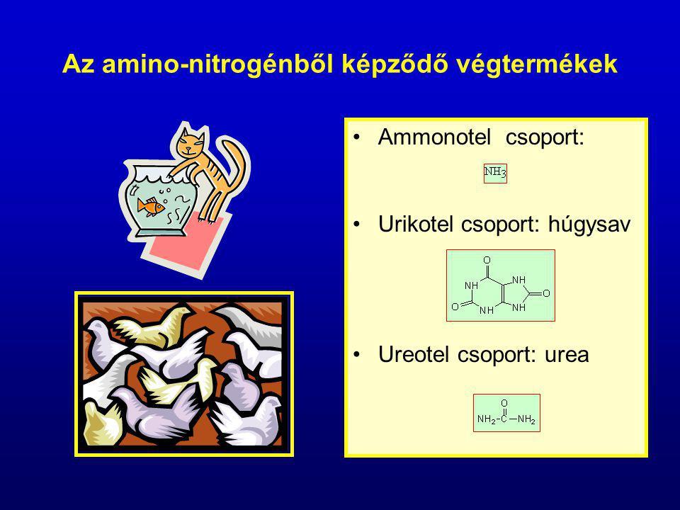 Az amino-nitrogénből képződő végtermékek Ammonotel csoport: Urikotel csoport: húgysav Ureotel csoport: urea