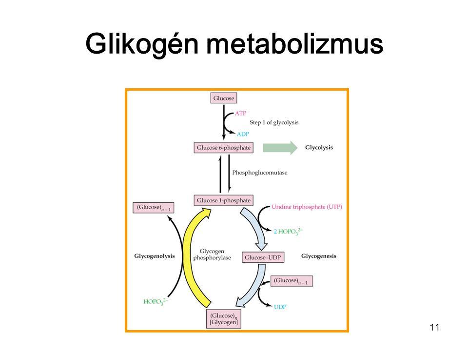 10 Glikogén szintézis glikogenin