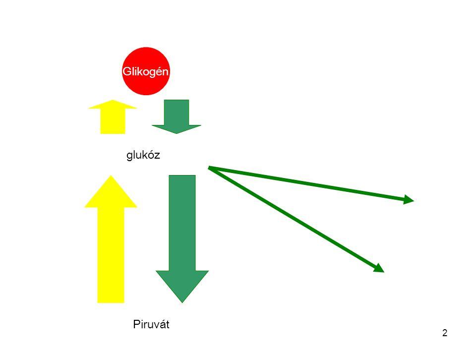 2 glukóz Piruvát