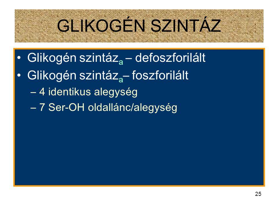 24 GLIKOGÉN SZINTÁZ - FOSZFORILÁCIÓ
