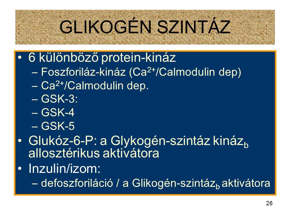 25 GLIKOGÉN SZINTÁZ Glikogén szintáz a – defoszforilált Glikogén szintáz a – foszforilált –4 identikus alegység –7 Ser-OH oldallánc/alegység