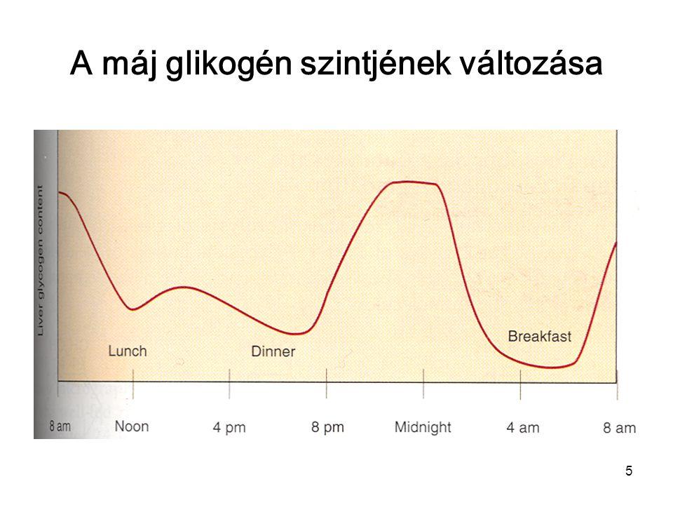 5 A máj glikogén szintjének változása