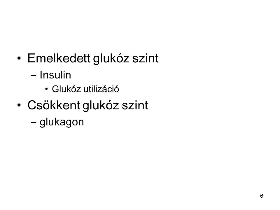 6 Emelkedett glukóz szint –Insulin Glukóz utilizáció Csökkent glukóz szint –glukagon