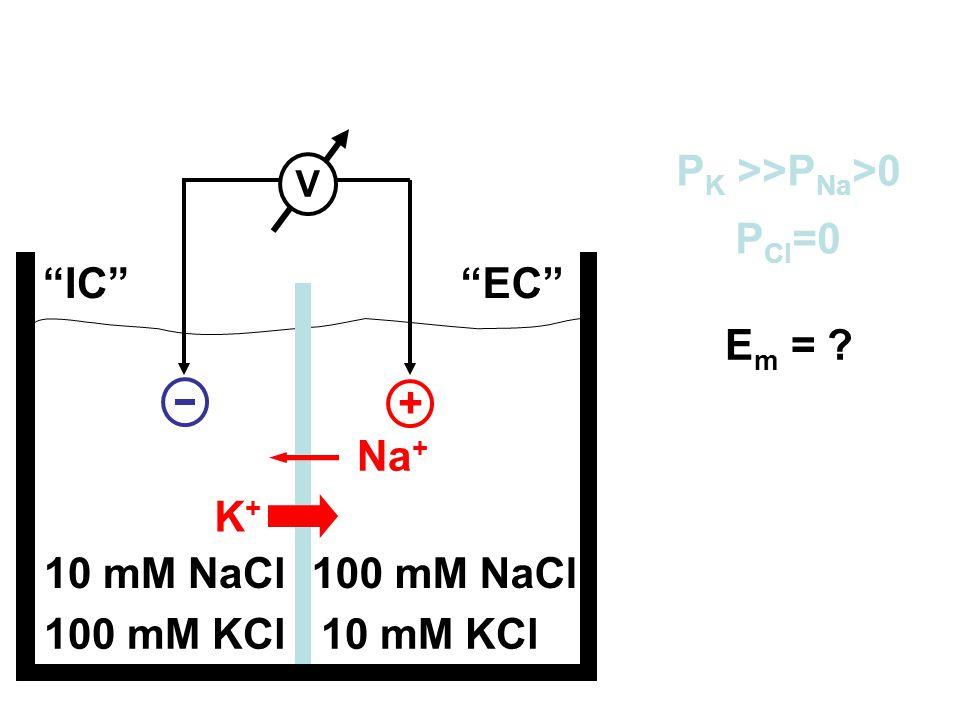 """100 mM KCl10 mM KCl 10 mM NaCl100 mM NaCl """"IC""""""""EC"""" P K >>P Na >0 P Cl =0 V + Na + K+K+ E m = ?"""