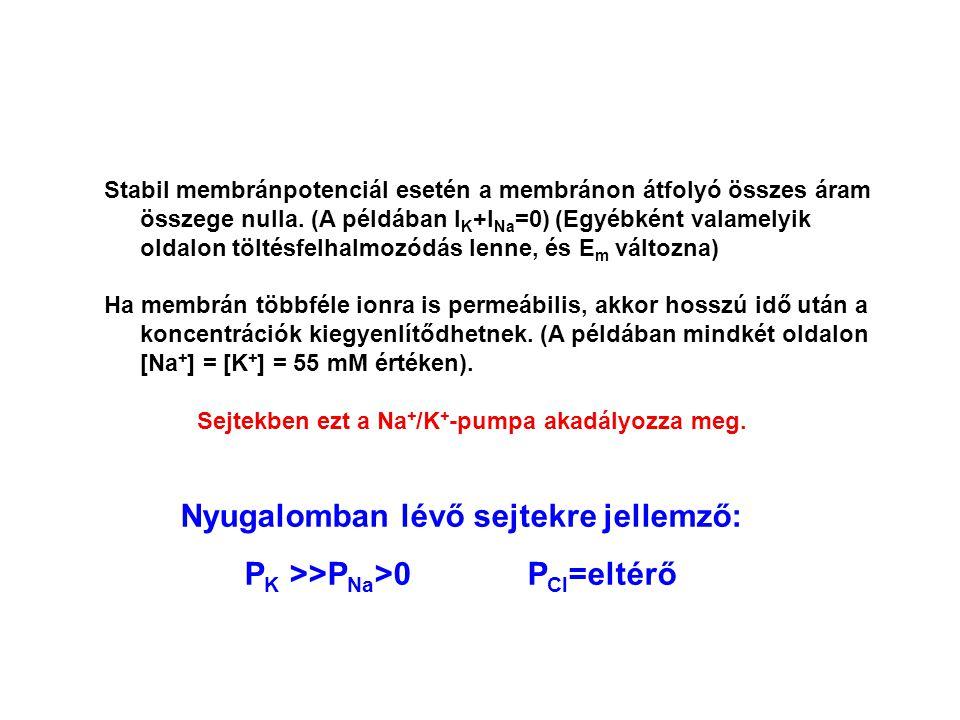 Stabil membránpotenciál esetén a membránon átfolyó összes áram összege nulla. (A példában I K +I Na =0) (Egyébként valamelyik oldalon töltésfelhalmozó