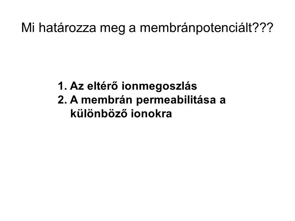 Mi határozza meg a membránpotenciált??? 1. Az eltérő ionmegoszlás 2. A membrán permeabilitása a különböző ionokra