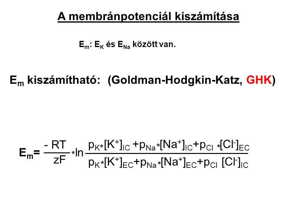 A membránpotenciál kiszámítása E m : E K és E Na között van. E m kiszámítható: (Goldman-Hodgkin-Katz, GHK) - RT zF p K [K + ] IC +p Na [Na + ] IC +p C