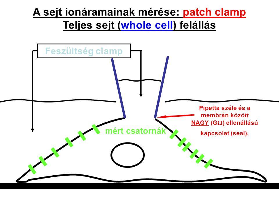 A sejt ionáramainak mérése: patch clamp Teljes sejt (whole cell) felállás Feszültség clamp mért csatornák Pipetta széle és a membrán között NAGY (G 
