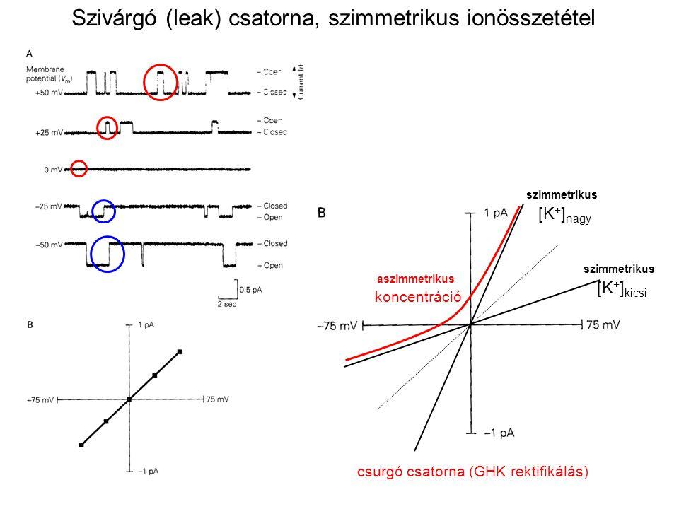 szimmetrikus [K + ] kicsi szimmetrikus [K + ] nagy aszimmetrikus koncentráció csurgó csatorna (GHK rektifikálás) Szivárgó (leak) csatorna, szimmetriku