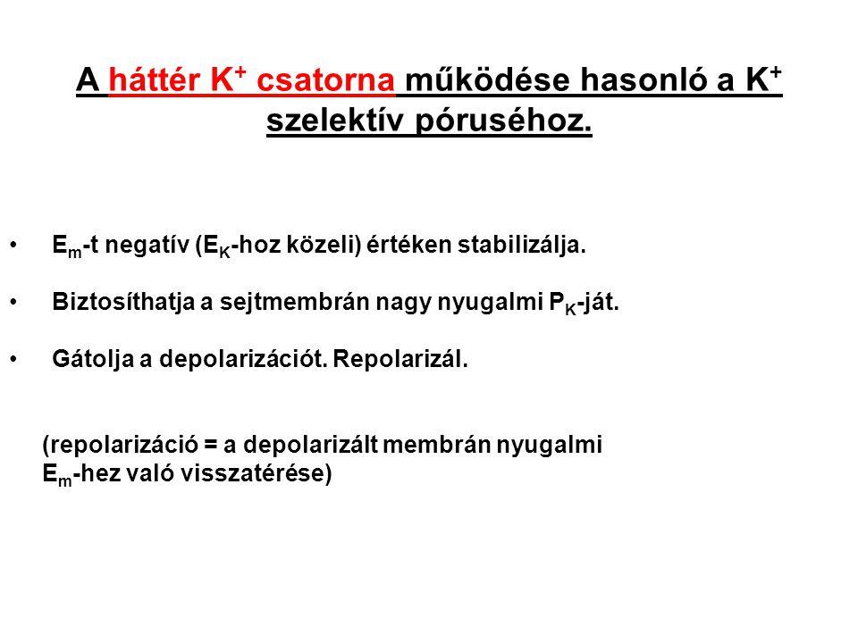 A háttér K + csatorna működése hasonló a K + szelektív póruséhoz. E m -t negatív (E K -hoz közeli) értéken stabilizálja. Biztosíthatja a sejtmembrán n