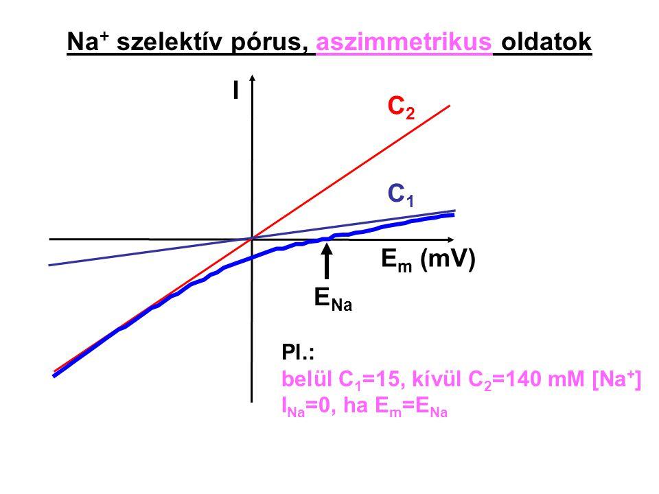Na + szelektív pórus, aszimmetrikus oldatok I E m (mV) C2C2 C1C1 Pl.: belül C 1 =15, kívül C 2 =140 mM [Na + ] I Na =0, ha E m =E Na E Na