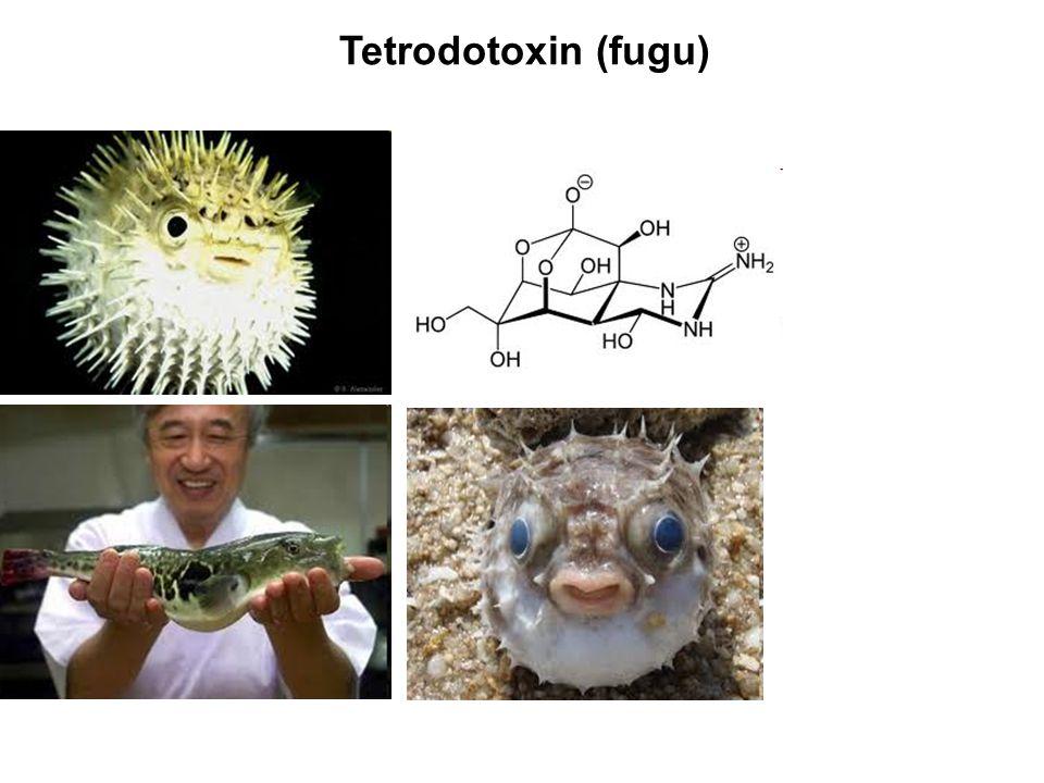 Tetrodotoxin (fugu)