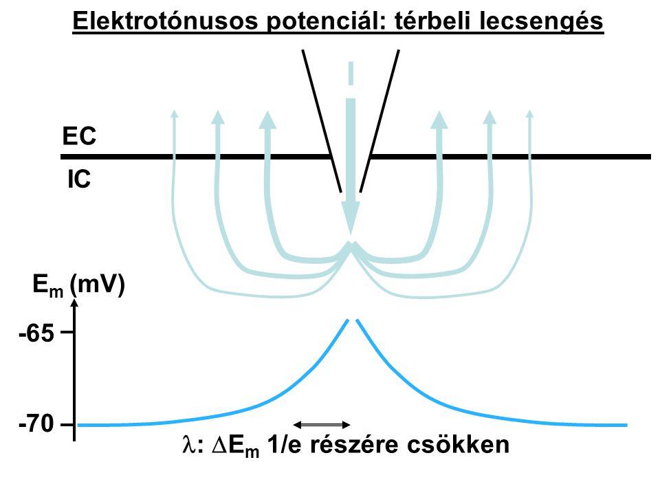 Elektrotónusos potenciál: térbeli lecsengés IC ECEC I E m (mV) -65 -70 :  E m 1/e részére csökken