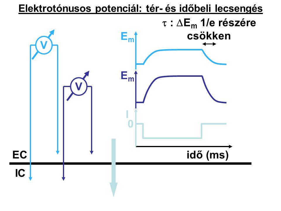 Elektrotónusos potenciál: tér- és időbeli lecsengés IC ECEC VV 0 I idő (ms) EmEm EmEm  :  E m 1/e részére csökken