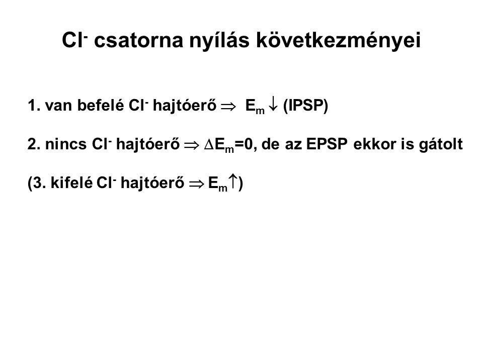 1. van befelé Cl - hajtóerő  E m  (IPSP) 2. nincs Cl - hajtóerő   E m =0, de az EPSP ekkor is gátolt (3. kifelé Cl - hajtóerő  E m  ) Cl - csat