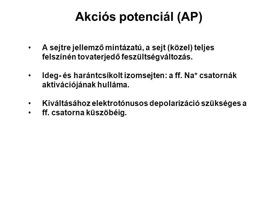 Akciós potenciál (AP) A sejtre jellemző mintázatú, a sejt (közel) teljes felszínén tovaterjedő feszültségváltozás. Ideg- és harántcsíkolt izomsejten: