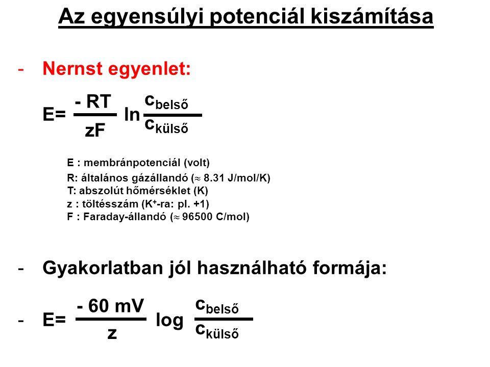Az egyensúlyi potenciál kiszámítása -Nernst egyenlet: E= ln E : membránpotenciál (volt) R: általános gázállandó (  8.31 J/mol/K) T: abszolút hőmérsék