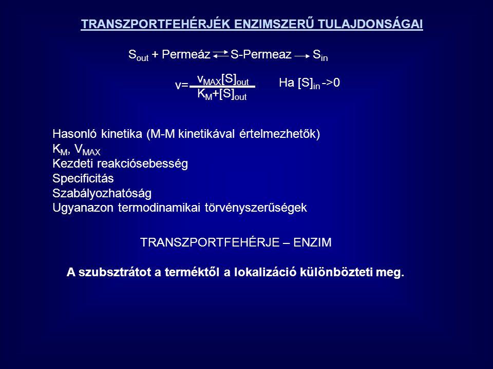 TRANSZPORTFEHÉRJÉK ENZIMSZERŰ TULAJDONSÁGAI S out + Permeáz S-Permeaz S in v MAX [S] out K M +[S] out v=v= Ha [S] in ->0 Hasonló kinetika (M-M kinetik
