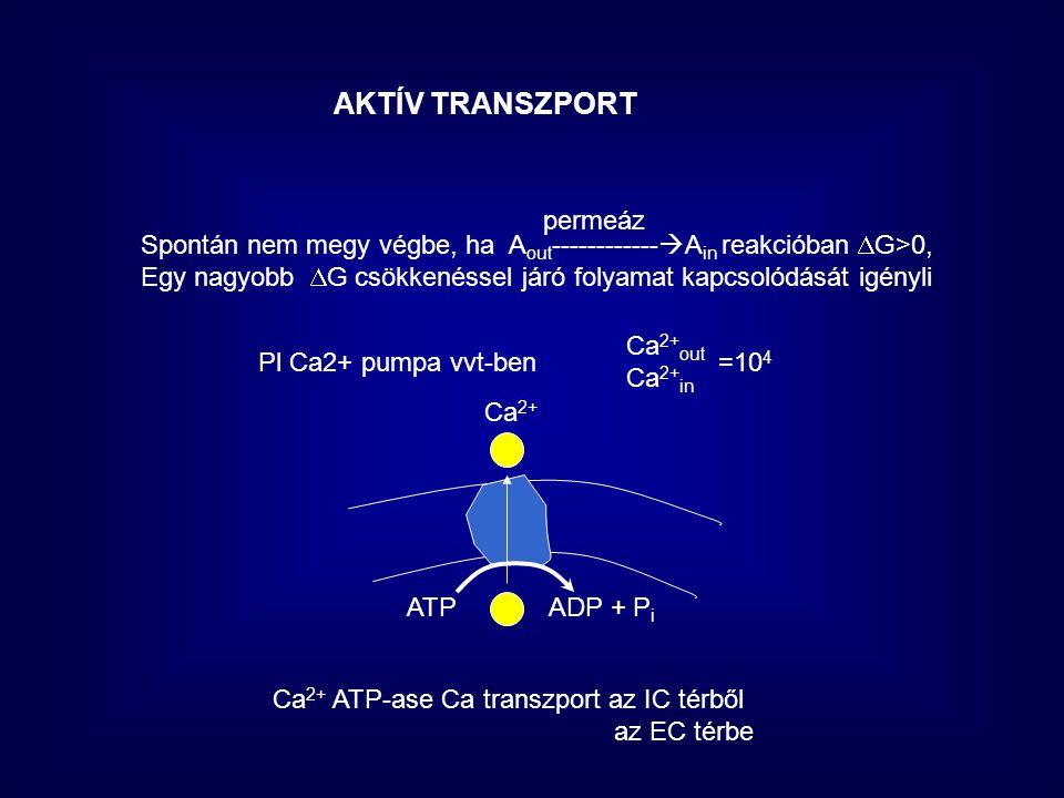 AKTÍV TRANSZPORT permeáz Pl Ca2+ pumpa vvt-ben Ca 2+ out Ca 2+ in =10 4 Spontán nem megy végbe, ha A out ------------  A in reakcióban  G>0, Egy nag