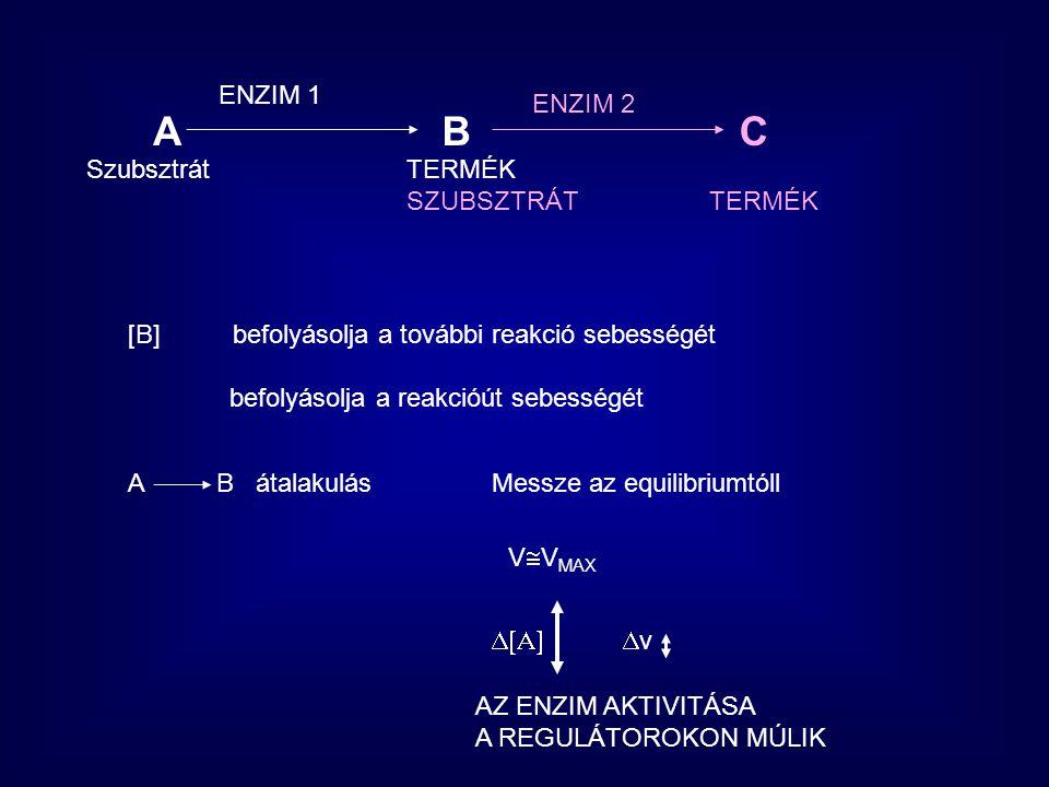 ABC ENZIM 1 ENZIM 2 Szubsztrát TERMÉK SZUBSZTRÁT TERMÉK [B] befolyásolja a további reakció sebességét befolyásolja a reakcióút sebességét A B átalakul
