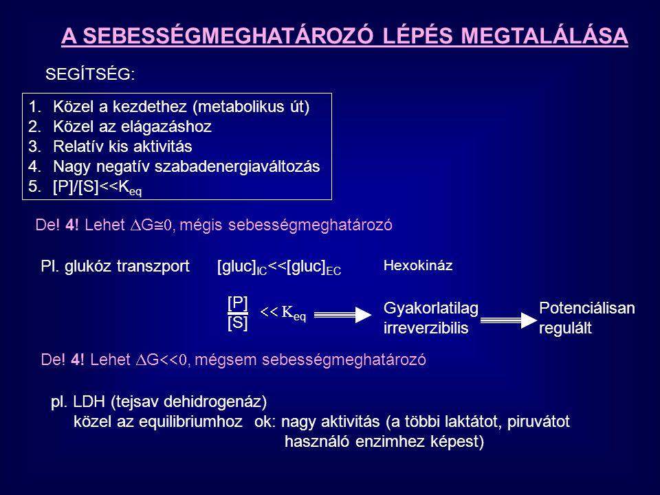 A SEBESSÉGMEGHATÁROZÓ LÉPÉS MEGTALÁLÁSA 1.Közel a kezdethez (metabolikus út) 2.Közel az elágazáshoz 3.Relatív kis aktivitás 4.Nagy negatív szabadenerg