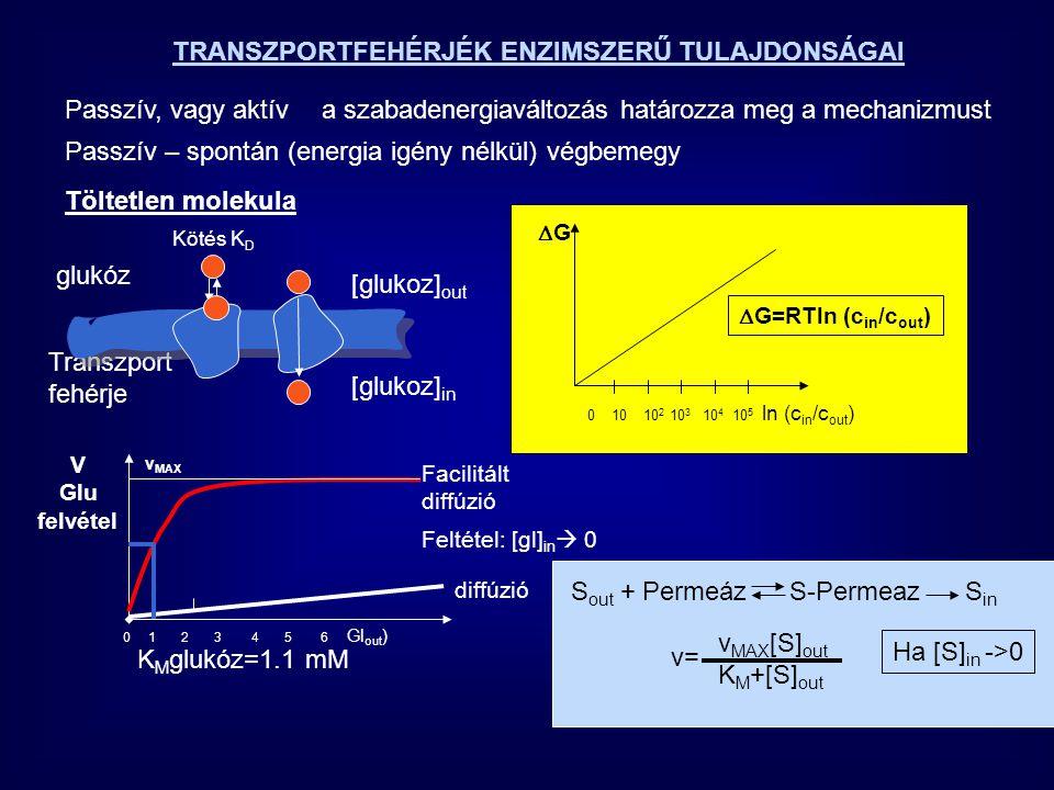 S out + Permeáz S-Permeaz S in v MAX [S] out K M +[S] out Ha [S] in ->0 TRANSZPORTFEHÉRJÉK ENZIMSZERŰ TULAJDONSÁGAI Passzív, vagy aktíva szabadenergia