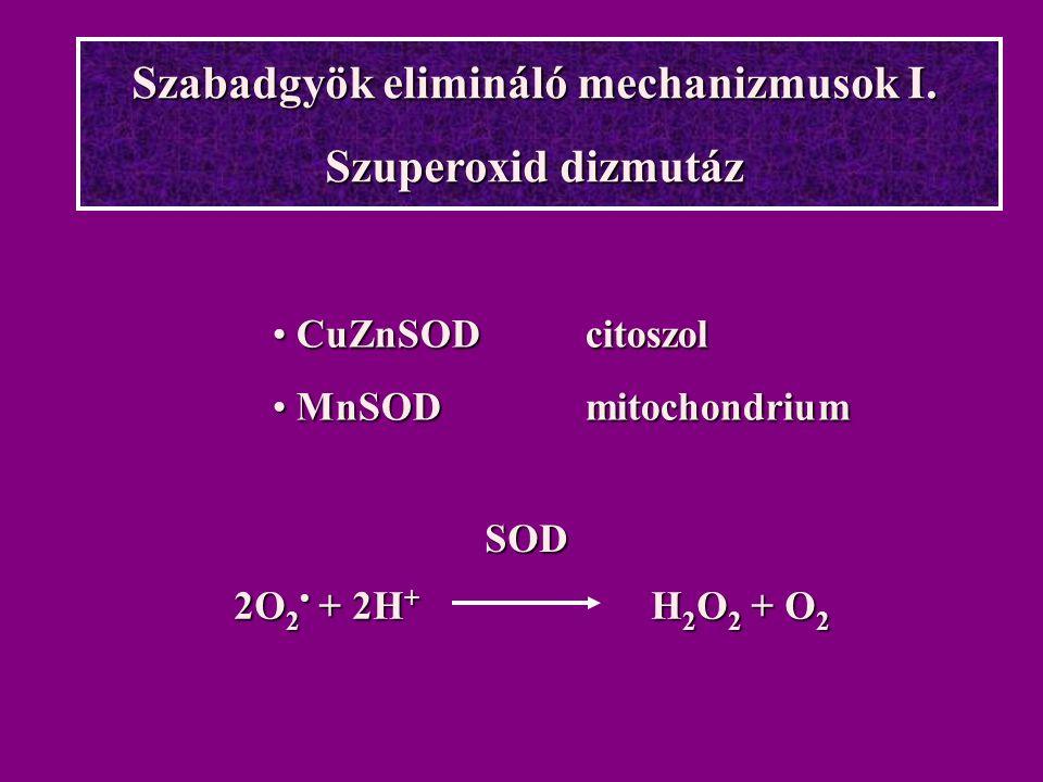 Szabadgyök elimináló mechanizmusok I. Szuperoxid dizmutáz 2O 2 + 2H + H 2 O 2 + O 2 SOD CuZnSOD citoszol CuZnSOD citoszol MnSODmitochondrium MnSODmito