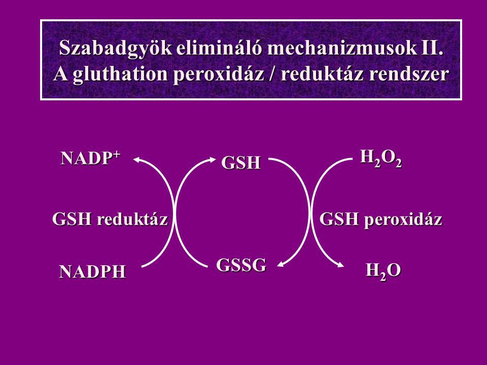 Szabadgyök elimináló mechanizmusok II. A gluthation peroxidáz / reduktáz rendszer GSHGSSG H2O2H2O2H2OH2OH2O2H2O2H2OH2O NADP + NADPH GSH reduktáz GSH p