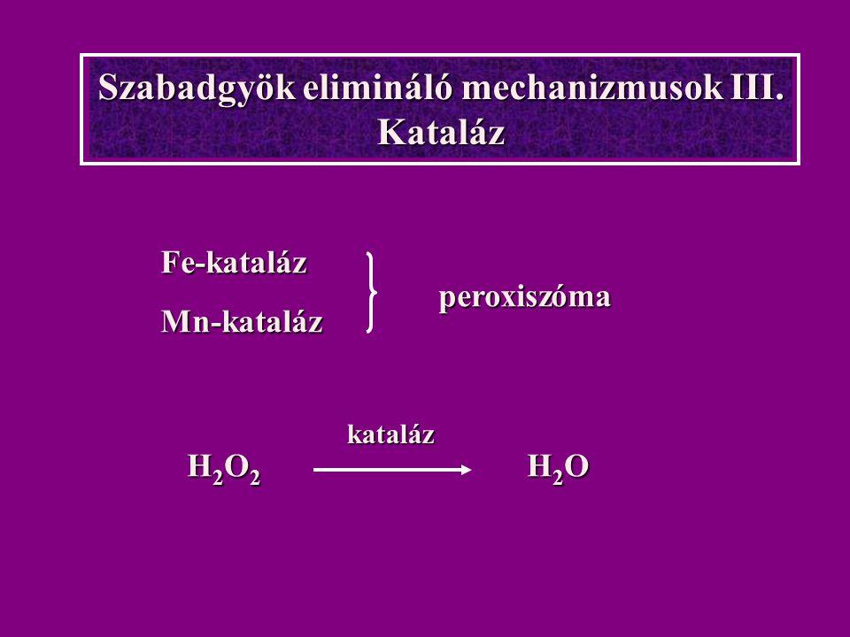 Szabadgyök elimináló mechanizmusok III. Kataláz Fe-katalázMn-kataláz peroxiszóma H2O2 H2OH2O2 H2OH2O2 H2OH2O2 H2O kataláz