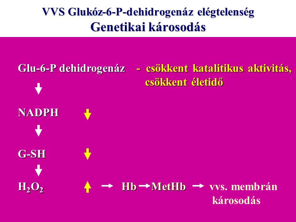 VVS Glukóz-6-P-dehidrogenáz elégtelenség Genetikai károsodás Glu-6-P dehidrogenáz NADPH G-SH H2O2H2O2H2O2H2O2 - csökkent katalitikus aktivitás, csökke