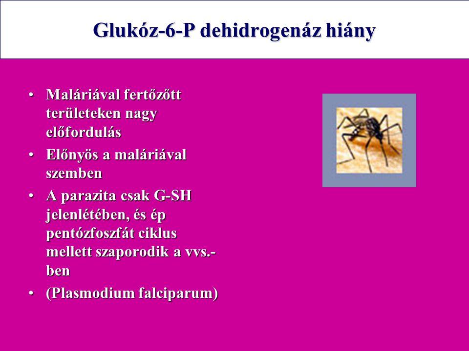 Glukóz-6-P dehidrogenáz hiány Maláriával fertőzőtt területeken nagy előfordulásMaláriával fertőzőtt területeken nagy előfordulás Előnyös a maláriával