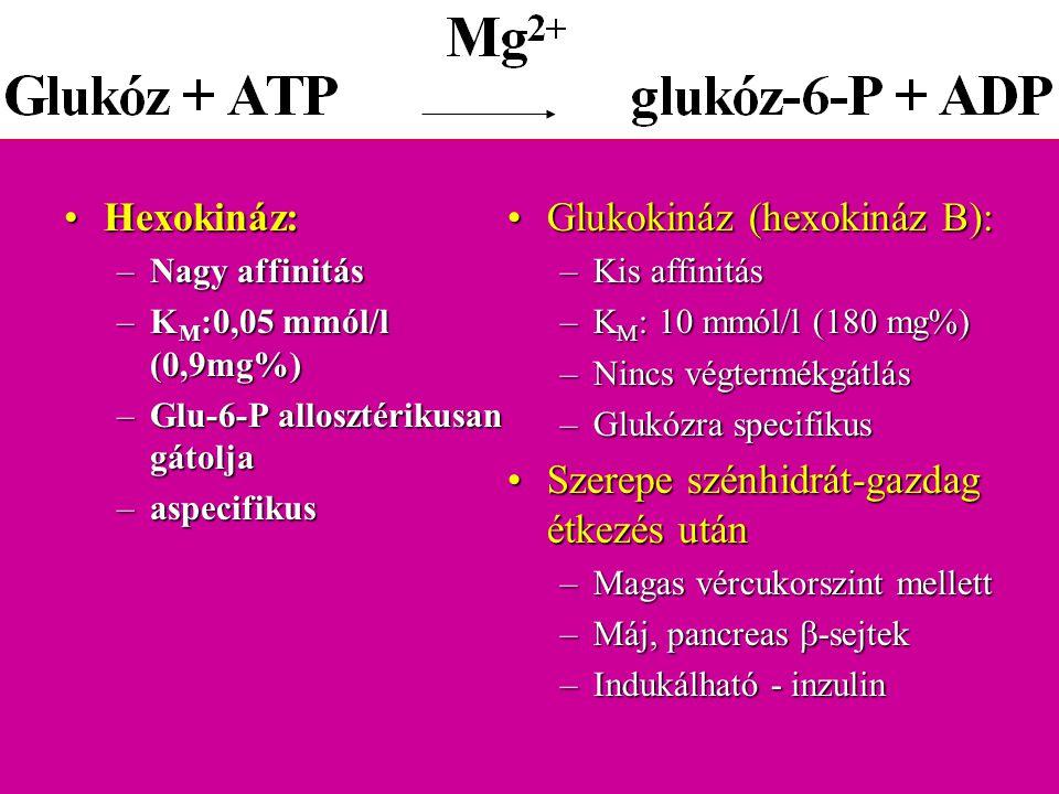 Hexokináz:Hexokináz: –Nagy affinitás –K M :0,05 mmól/l (0,9mg%) –Glu-6-P allosztérikusan gátolja –aspecifikus Glukokináz (hexokináz B):Glukokináz (hex