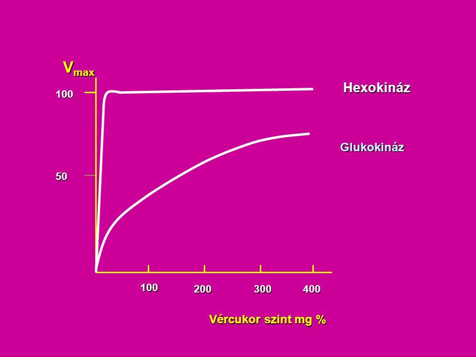 Glukokinázt reguláló fehérje (glucokinase regulatory protein) Glukokináz Fruktóz-1-P Fruktóz Fruktokináz ATP ADP A táplálékkal elfogyasztott fruktóz stimulálja a glukóz foszforilációt a májban --