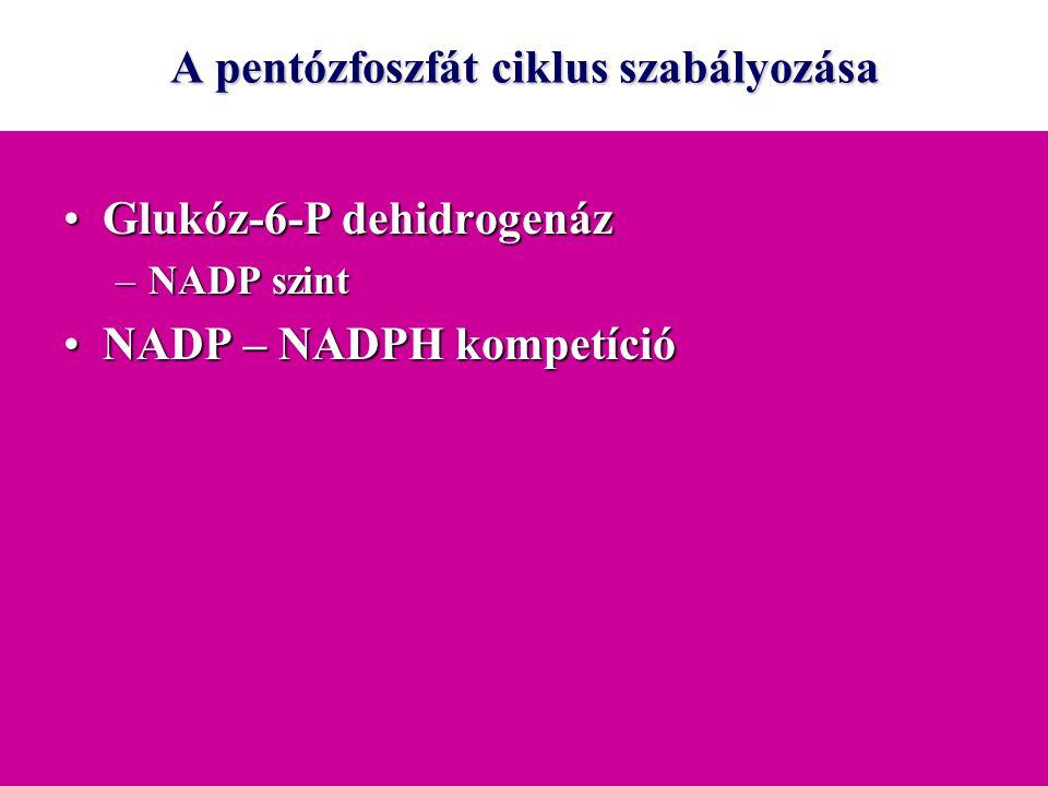 A pentózfoszfát ciklus szabályozása Glukóz-6-P dehidrogenázGlukóz-6-P dehidrogenáz –NADP szint NADP – NADPH kompetícióNADP – NADPH kompetíció