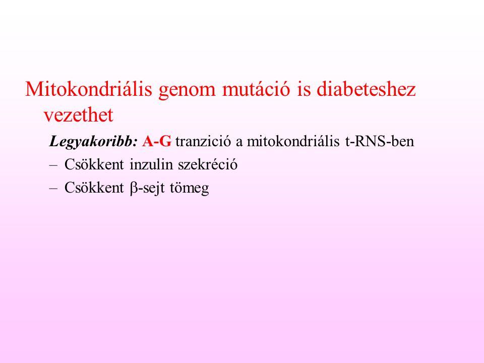 Mitokondriális genom mutáció is diabeteshez vezethet Legyakoribb: A-G tranzició a mitokondriális t-RNS-ben –Csökkent inzulin szekréció –Csökkent  -se