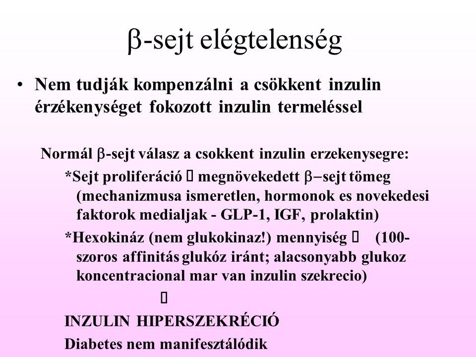  -sejt elégtelenség Nem tudják kompenzálni a csökkent inzulin érzékenységet fokozott inzulin termeléssel Normál  -sejt válasz a csokkent inzulin erz