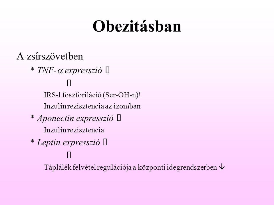 Obezitásban A zsírszövetben * TNF-  expresszió   IRS-l foszforiláció (Ser-OH-n)! Inzulin rezisztencia az izomban * Aponectin expresszió  Inzul