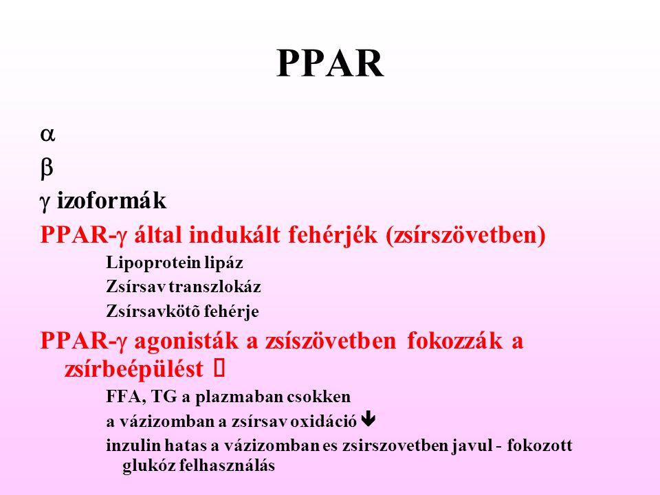 PPAR    izoformák PPAR-  által indukált fehérjék (zsírszövetben) Lipoprotein lipáz Zsírsav transzlokáz Zsírsavkötõ fehérje PPAR-  agonisták a zs