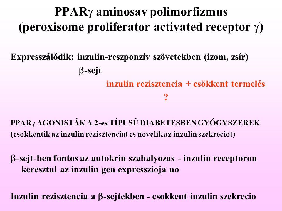 PPAR  aminosav polimorfizmus (peroxisome proliferator activated receptor  ) Expresszálódik: inzulin-reszponzív szövetekben (izom, zsír)  -sejt inzu