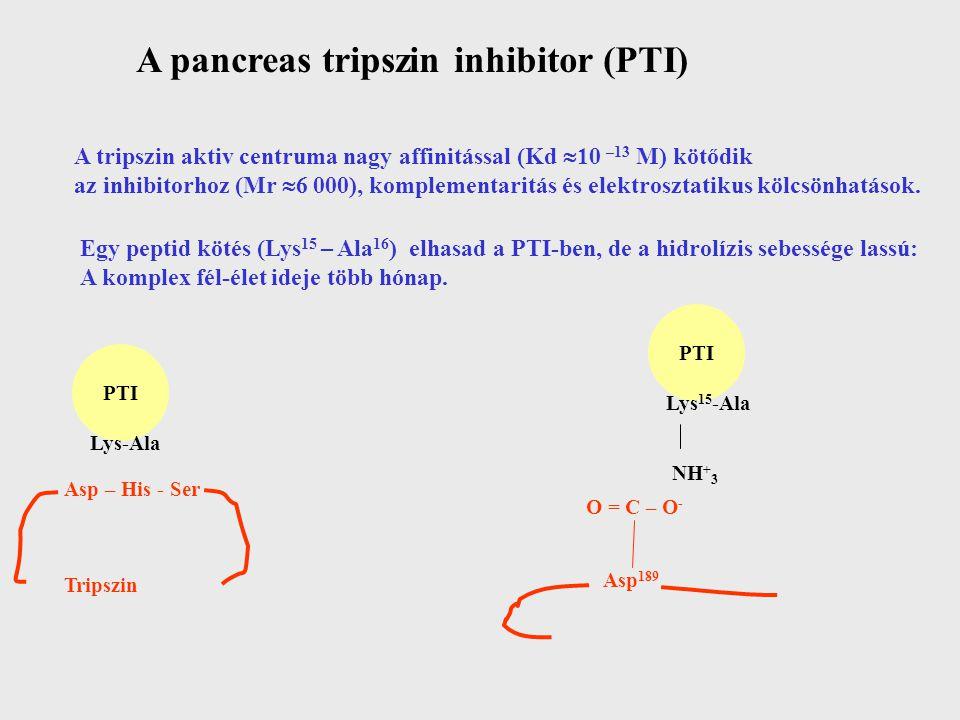 A pancreas tripszin inhibitor (PTI) A tripszin aktiv centruma nagy affinitással (Kd  10 –13 M) kötődik az inhibitorhoz (Mr  6 000), komplementaritás és elektrosztatikus kölcsönhatások.