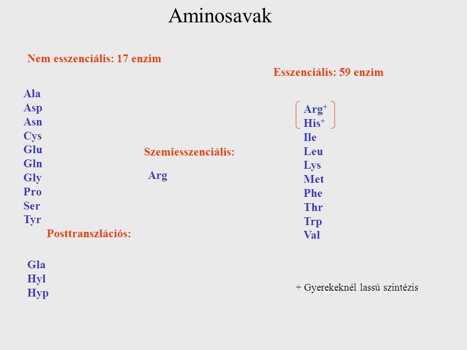 Aminosavak Nem esszenciális: 17 enzim Ala Asp Asn Cys Glu Gln Gly Pro Ser Tyr Posttranszlációs: Gla Hyl Hyp Szemiesszenciális: Arg Esszenciális: 59 en