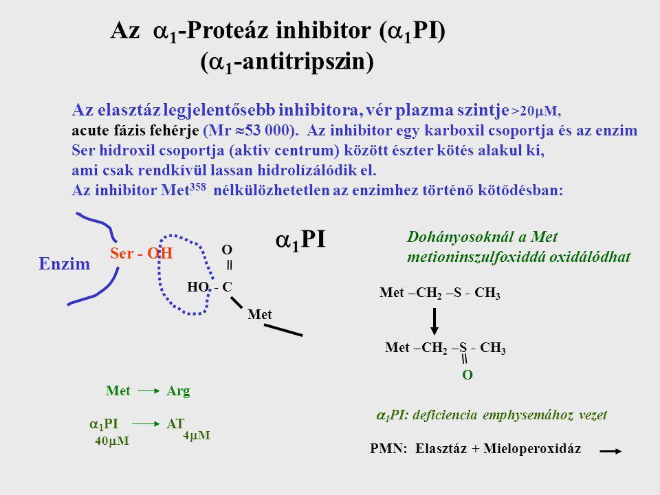 Az  1 -Proteáz inhibitor (  1 PI) (  1 -antitripszin) Az elasztáz legjelentősebb inhibitora, vér plazma szintje >20  M, acute fázis fehérje (Mr  53 000).