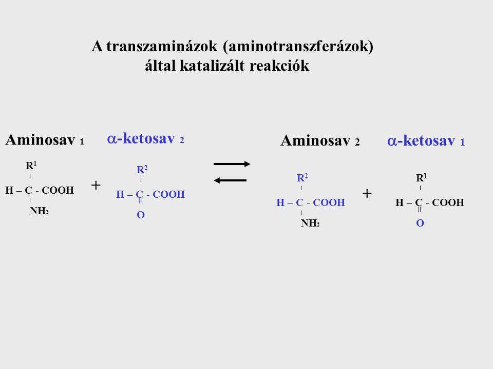 A transzaminázok (aminotranszferázok) által katalizált reakciók Aminosav 1 H – C - COOH NH 2 R1R1  -ketosav 2 + H – C - COOH O R2R2 = Aminosav 2 H – C - COOH NH 2 R2R2  -ketosav 1 H – C - COOH O R1R1 = +