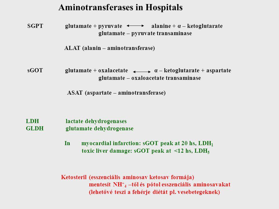 Aminotransferases in Hospitals SGPT glutamate + pyruvate alanine + α – ketoglutarate glutamate – pyruvate transaminase ALAT (alanin – aminotransferase) sGOT glutamate + oxalacetate α – ketoglutarate + aspartate glutamate – oxaloacetate transaminase ASAT (aspartate – aminotransferase) LDH lactate dehydrogenases GLDH glutamate dehydrogenase In myocardial infarction: sGOT peak at 20 hs, LDH 1 toxic liver damage: sGOT peak at <12 hs, LDH 5 Ketosteril (esszenciális aminosav ketosav formája) mentesít NH + 4 –től és pótol esszenciális aminosavakat (lehetővé teszi a fehérje diétát pl.
