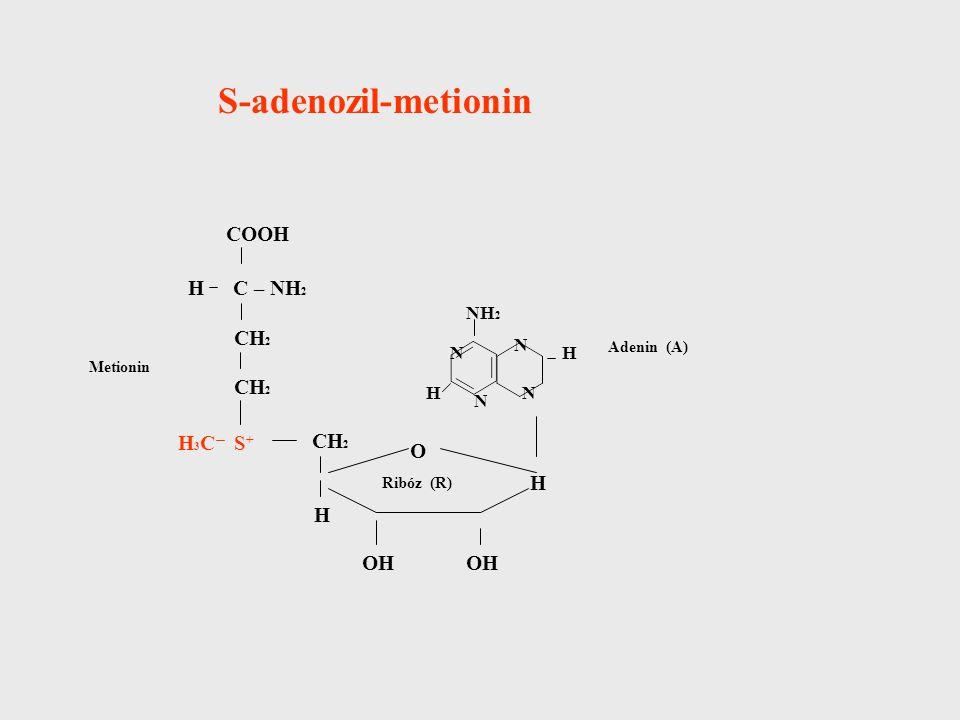 S-adenozil-metionin COOH C – NH 2 CH 2 S+S+ H H3CH3C H OH H O NH 2 N H N N H N Ribóz (R) Adenin (A) Metionin